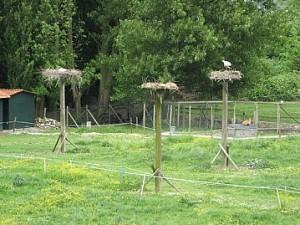 Blommendag-16-05-2009 (44)